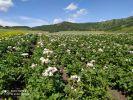 Современное оборудование апробирует сельскохозяйственный кооператив «Семена Горного Алтая»